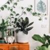 Sase obiecte decorative care-ti aduc casa mai aproape de natura