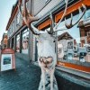 animal-antlers-architecture-2119700