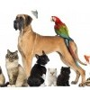 4 lucruri pe care trebuie sa le stii inainte sa iti iei un animal de companie