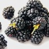 berries-blackberries-bramble-892808