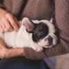 Cum sa ii transmiti celui mic dragostea si grija pentru animale