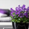 Ultra Violet, culoarea anului 2018, in amenajarea casei