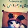 Pufos revine! Una din cele mai frumoase povesti cu pisici