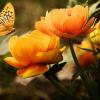 Ecoterapia, un nou pas catre evolutia suprema a medicinei