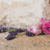 pfd-moda-cosmetica-naturista-plante-care-te_fac-mai-frumoasa